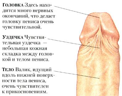 parney-foto-seks-zhenskie-organi-russkiy
