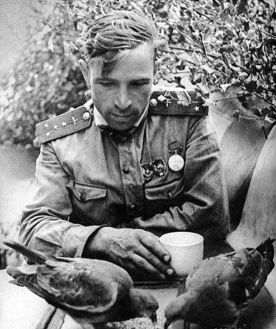 Советский летчик кормит голубей в минуты отдыха