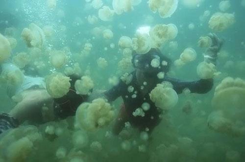 Медузье озеро За счет фотосинтеза они обеспечивают себя энергией и питательными веществами.