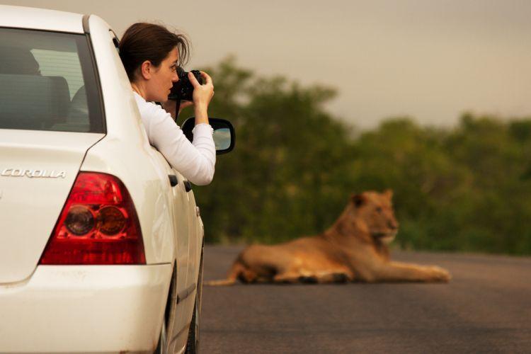 Национальный парк Kruger. Клик - следующее фото.