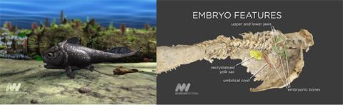 Десять самых странных соседей Замыкает список окаменелый образец живородящей прарыбы, жившей 380 млн лет назад.