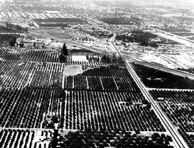 Диснейленд, его вчера и сегодня Уолт Дисней приобрел 160 акров апельсиновых рощ у 17 разных владельцев в Анахайме, чтобы воплотить свою мечту: открыть парк, где родители и дети могли бы весело проводить время вместе