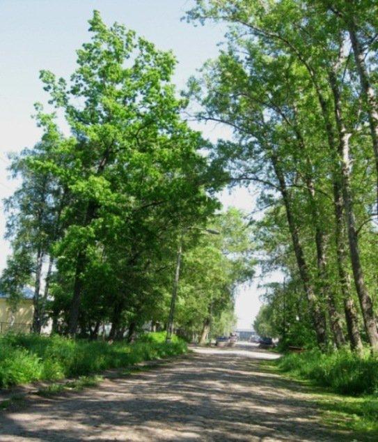 Олонец - древнейший город Карелии Кое-где в Олонце сохранилась мощёная булыжная мостовая...
