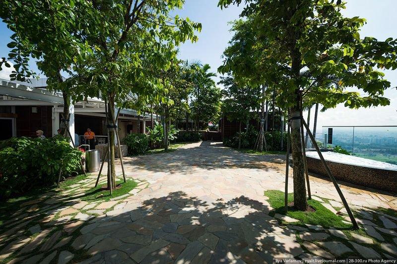 Отель Marina Bay Sands, бассейн под облаками На «палубе» разбит тропический сад – 250 деревьев и 650 разнообразных растений. Все деревья и пальмы настоящие