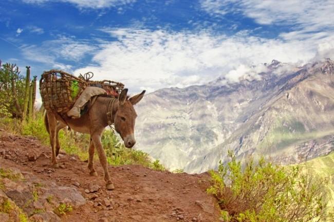 Красивейшие каньоны мира Каньон Колка, Перу