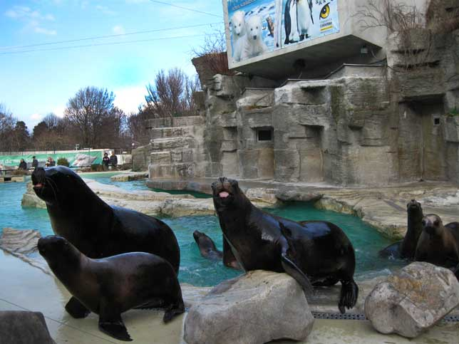 Музеи и достопримечательности Вены В зоопарке морские львы пытаются контактировать с посетителями