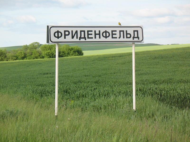 Горы Воронежской области Хутор Фриденфельд. На табличке - щурка золотистая