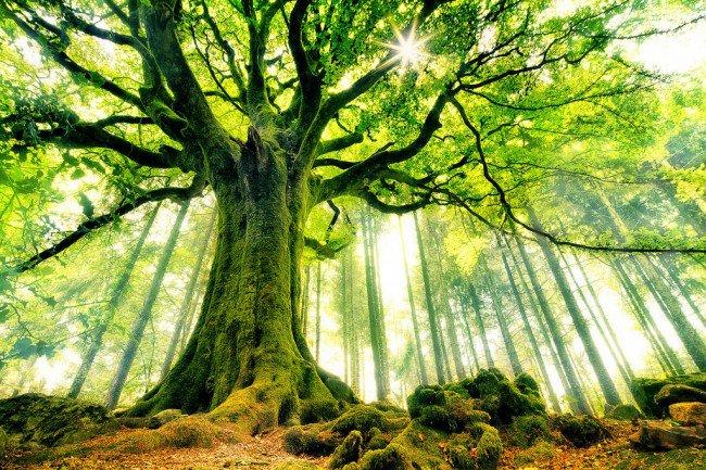 20 мест на планете, в существование которых трудно поверить Сказочный лес