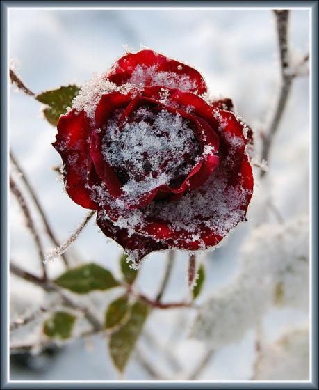 Зимний пoзитив