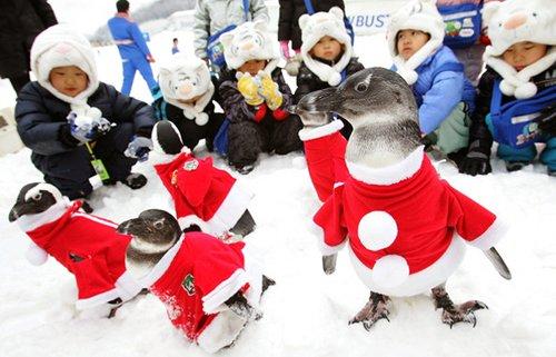 Шоу пингвинов