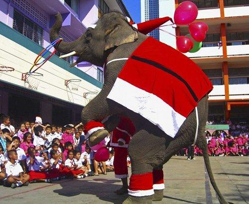 Лучшие Рождественские фотографии Рождественский слон и ученики тайской школы в провинции Аюттая