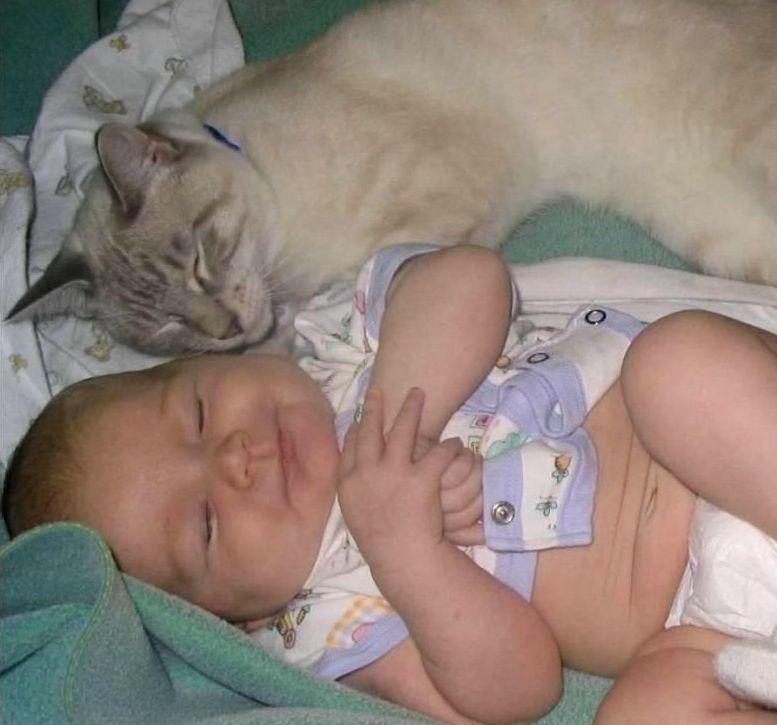 Животные_приколы,курьезы
