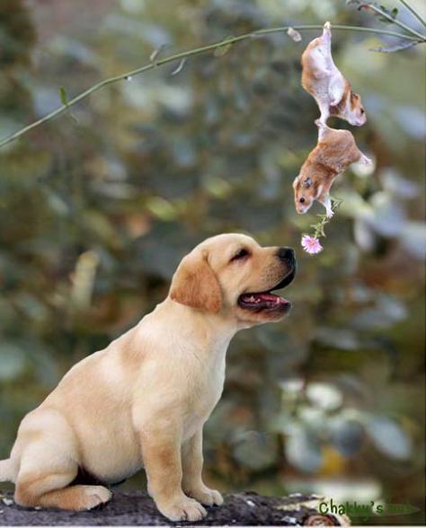 Фото приколы, курьезы: Животные - Дружище, разреши поздравить тебя с...