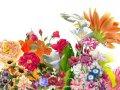 Открытки - Тематические - Цветы
