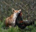 Открытки - Тематические - Животные