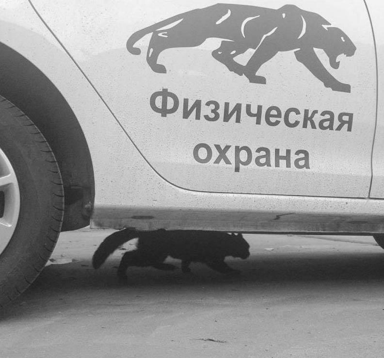 Фото приколы, курьезы: Животные -