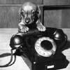 Собака заговорит с вами по мобильнику