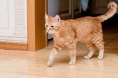 Чем вреден кот в городской квартире? Мы в ответе за тех, кого приручили...