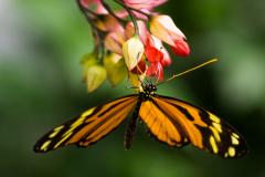 Что нам приносит любовь, счастье и достаток, или Что мы знаем о бабочках?
