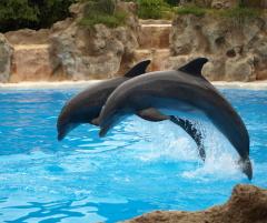 Как дрессируют дельфинов? Будет вам и рыбка, будет и свисток...