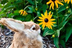 О чем поведает Черноглазая Сьюзен? Об индейцах и Нобеле, о наших цветущих садах...