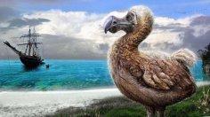 Маврикий: во что превратилось «гнездо пиратов»? В ожидании Додо...