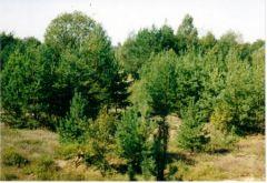 Сколько веков Беловежской пуще? Празднуем 600-летие охраны древнего европейского леса