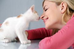 Как научить свою кошку цирковым трюкам? Подробная инструкция.