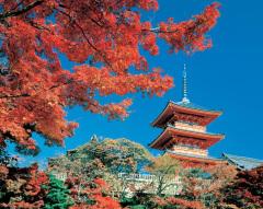 Где восходит солнце, или Что полезно знать о путешествии в Японию?