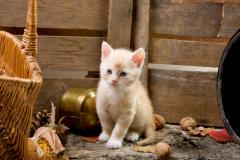 Как приучить котенка к горшку?