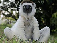 Животный мир Мадагаскара