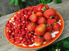 Земляника или клубника - что вкуснее и полезней?
