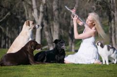 Кошки, собаки и люди: как найти общий язык с питомцами?