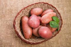 Как спасти урожай картофеля?