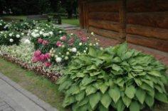 Чем украсить тенистые уголки сада? Роман с хостой