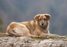 Беспризорные собаки: как обезопасить себя пешеходу и велосипедисту?