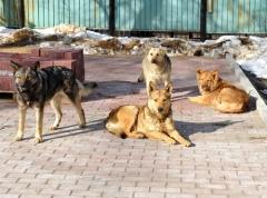 Как защититься от нападения собак?
