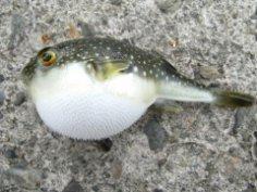 Экзотическая кухня. Морская живность: что можно съесть?