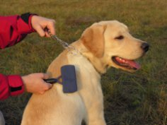 Уход за собакой: чем вам нужно обзавестись?