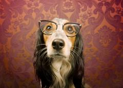 Животные умнеют? Исследования и факты