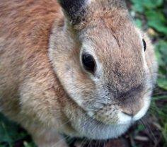 Кролики: хвостатые секреты