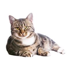 Бывают ли кошки-домоправительницы? Что было дальше...