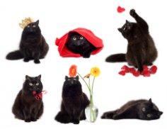 Знаете ли вы, что ...? Любопытные факты о кошках
