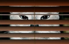 Сколько стоит кот-шпион? История акустического котенка