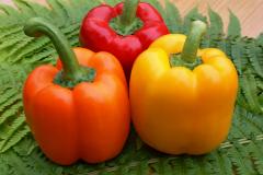С кем в родстве болгарский перец?