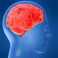 Мозг человека достиг предела развития