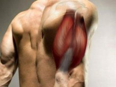 7 основных советов по набору мышечной массы