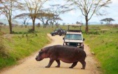 Как подготовиться к путешествию в Африку?