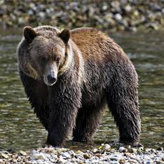 Туристы смутили злого медведя инструкциями