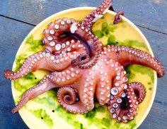 Как едят экзотических животных